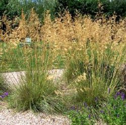 kwekerij bastin vaste planten lavendel kruiden prairieplanten siergrassen en andere. Black Bedroom Furniture Sets. Home Design Ideas